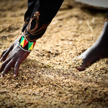 Winning Africa's Future: Food Security for All